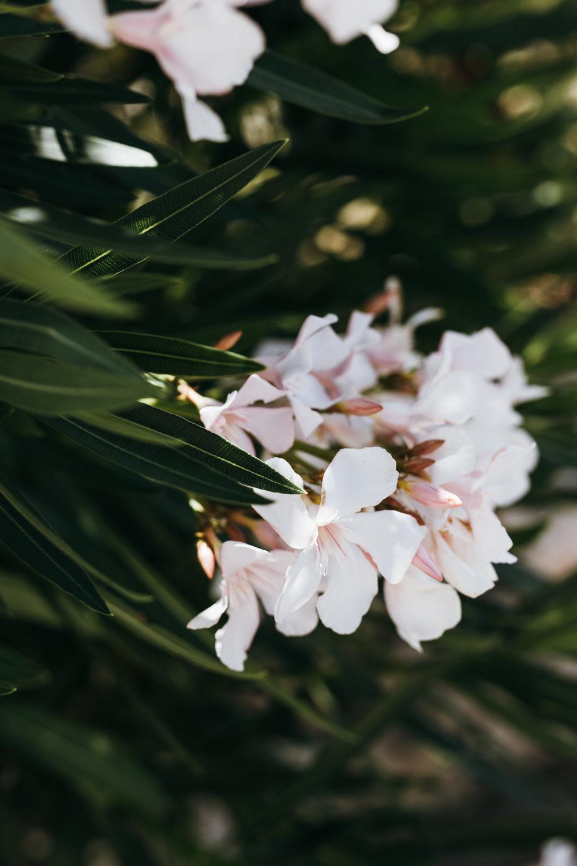 Ostuni flowers