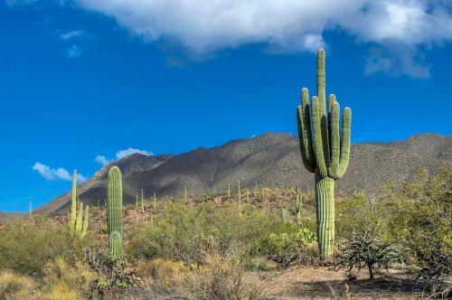 Photo Credit: Philip Scott Johnson, via Visit Tucson on facebook.