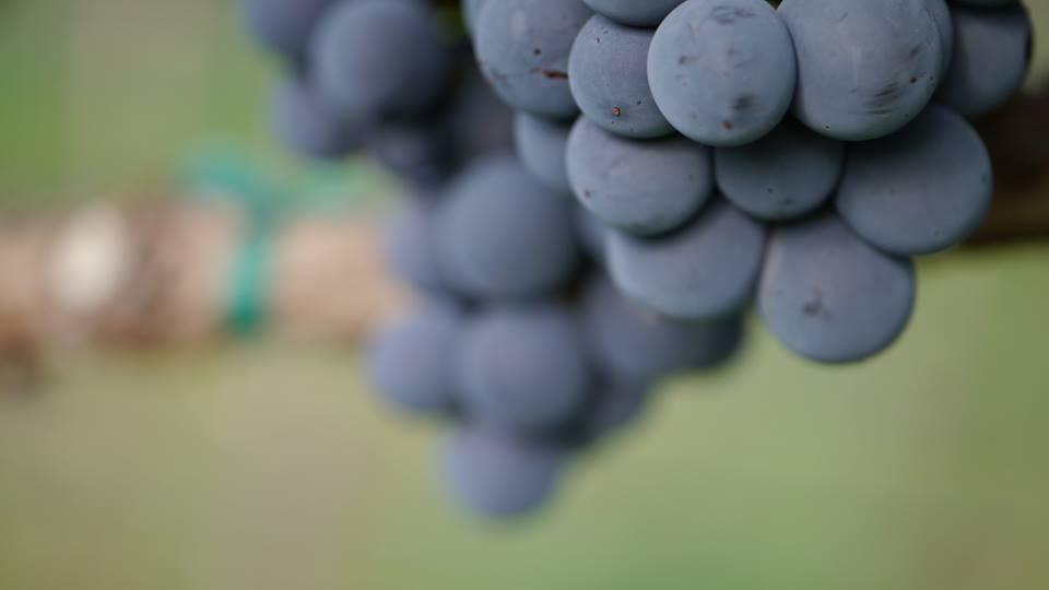 Photo: Verde Valley Wine Festival