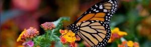 dbg butterfly