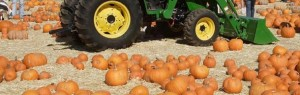 pumpkin-festival-header-1