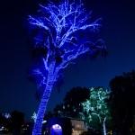 Phoenix Zoo - ZooLights 2013 - 48