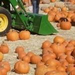 dbg pumpkins