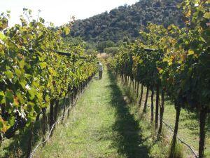 colibri-vineyard-2