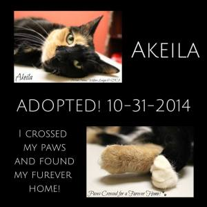 foster cat Akeila adopted