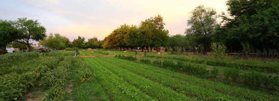 Image via The Farm at South Mountain