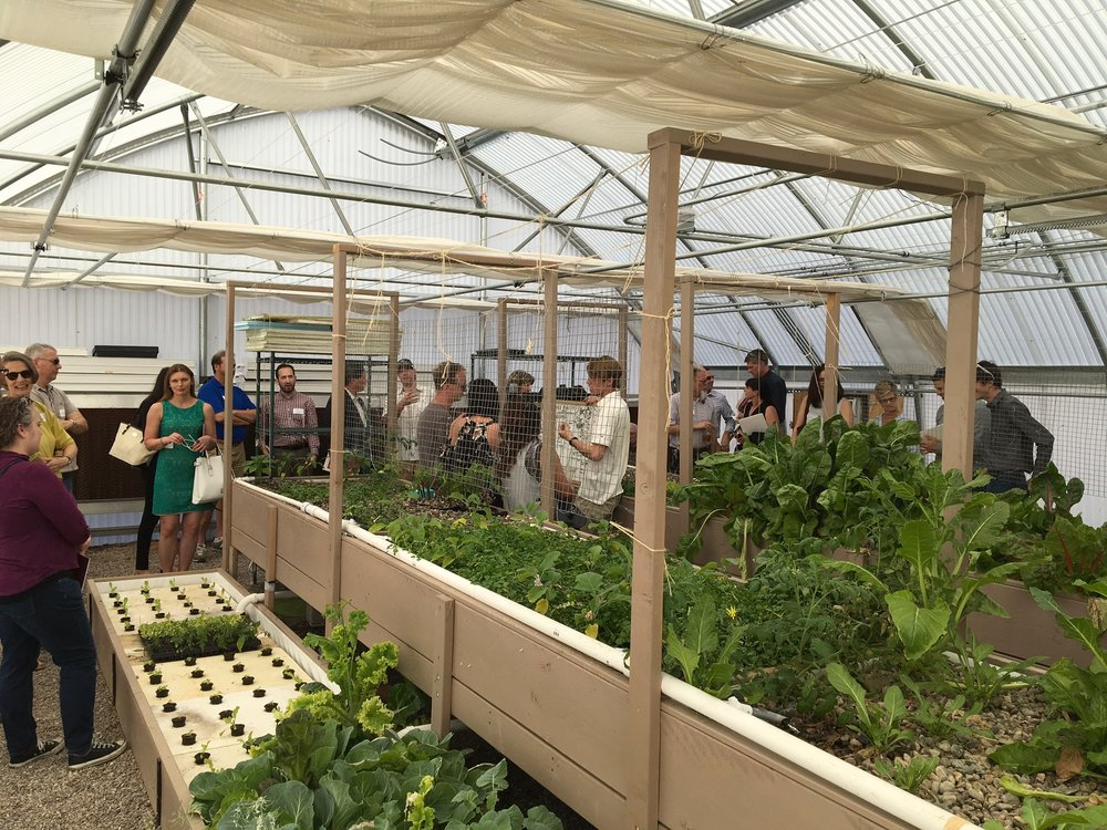 Onsite at the IRC Aquaponics facility. Photo by Ryan Winkle