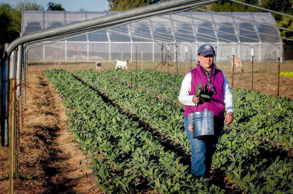 LFAF Food Program Mayas Farm.jpg