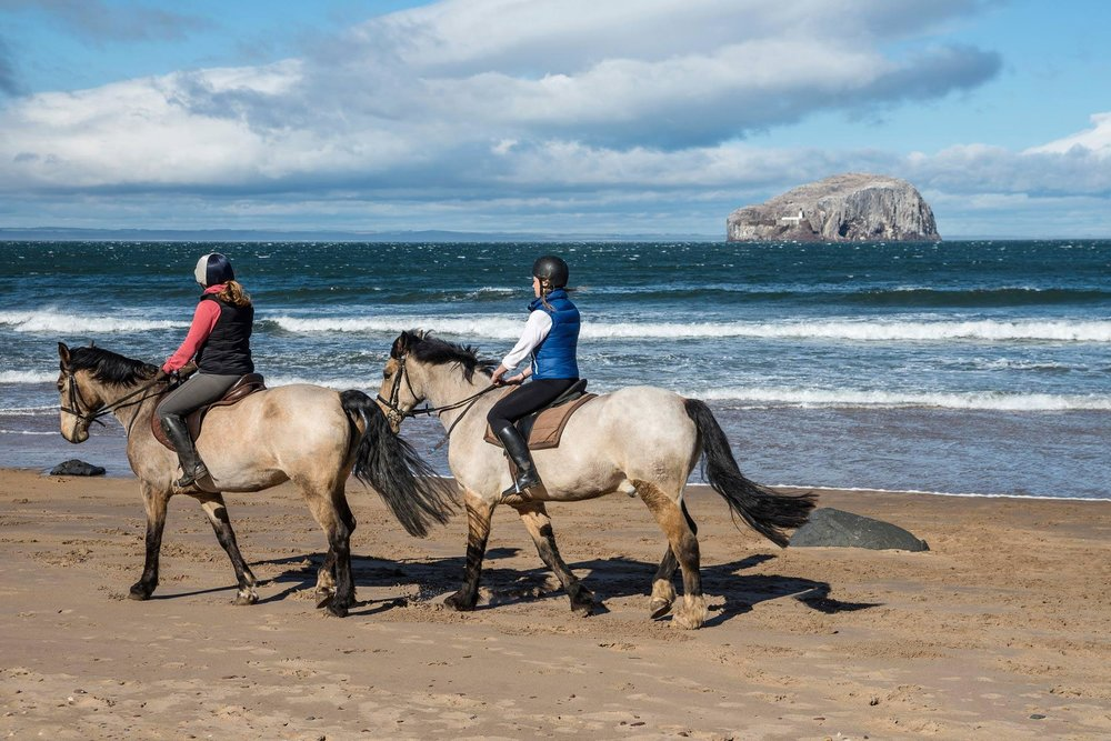 horse-riding-seacliff-beach.jpg