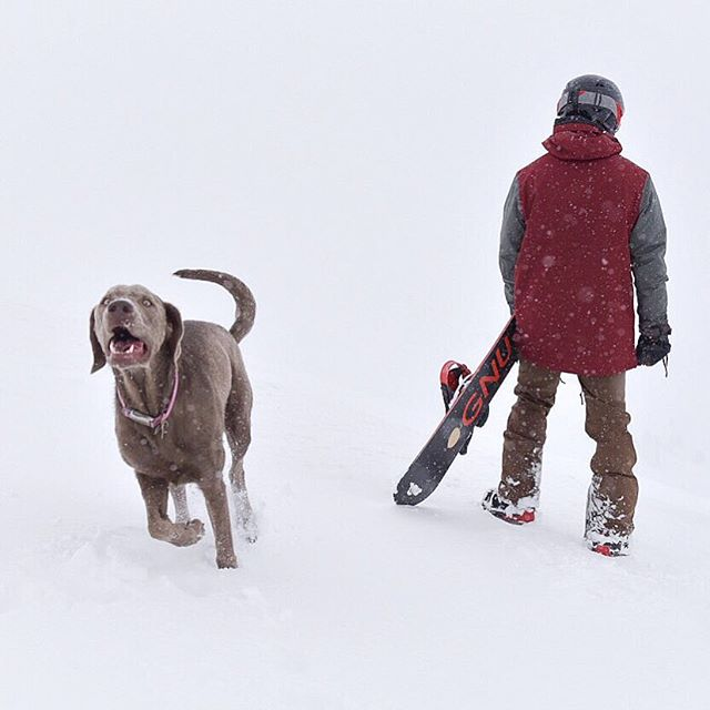 On our way back, we stopped to ski down a mountain. We weren't the only ones with that idea. #dogsofinstagram #lovelandpass #snowboarder #skiing #firsttimeskiing #coloradolife #lovetravel #traveler
