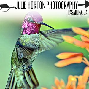 http://www.juliehortonphotography.com