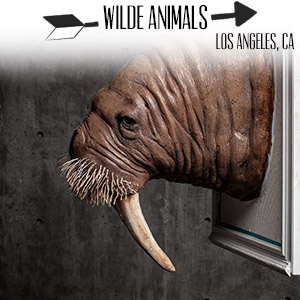 www.wildeanimals.com