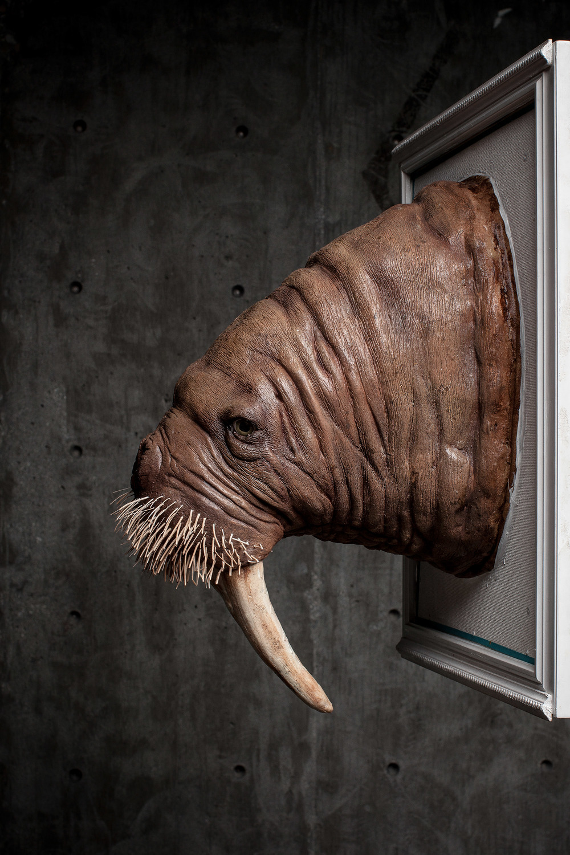 Pacific Walrus.jpg
