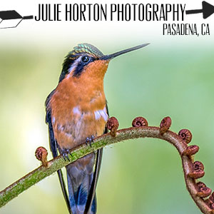 Julie Horton Photography.jpg