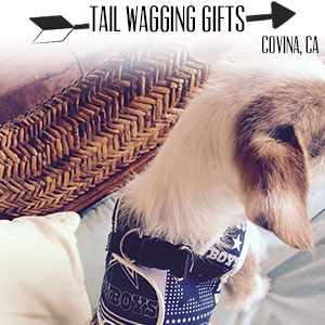 Tail Wagging Gifts.jpg