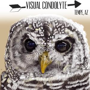 Visual Condolyte.jpg