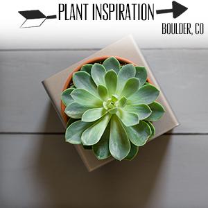 Plant Inspiration.jpg