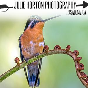 Julie Hoton Photography.jpg