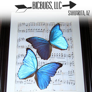 Bicbugs, LLC.jpg