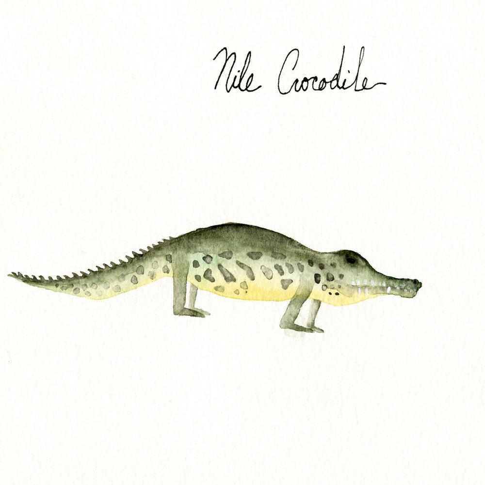 nilecrocodile.jpg