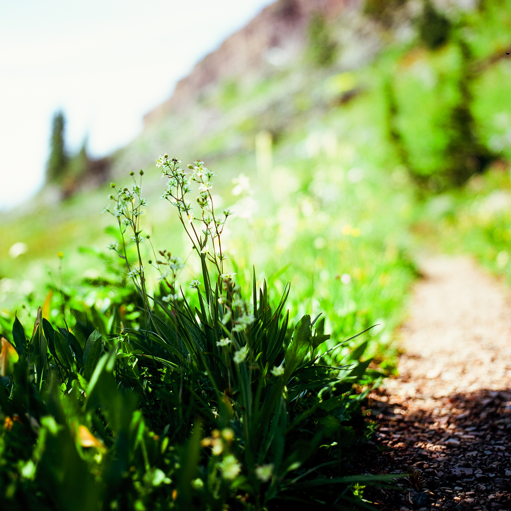 wildflowers on the path.jpg