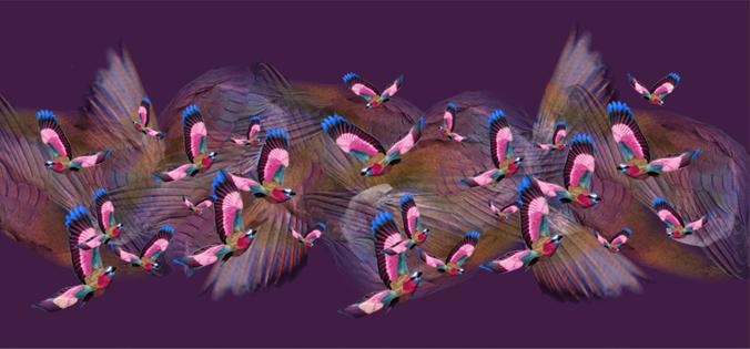 A/W 2014 - Aubergine Hummingbird