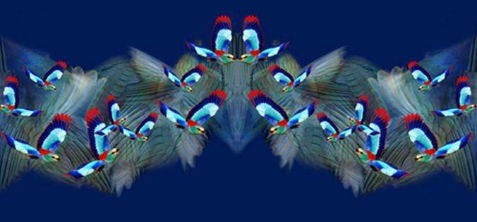 S/S2013 -Cobalt Blue Hummingbird