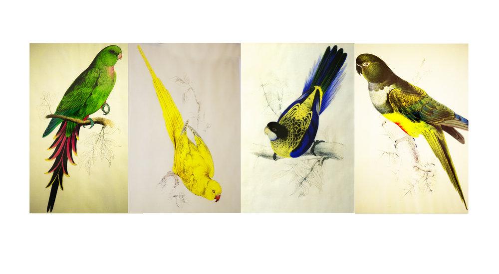 4 parrots.jpg