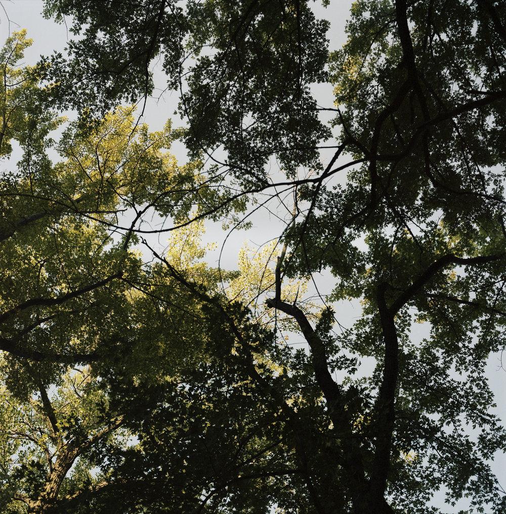 SKMP024 canopy AA.jpg