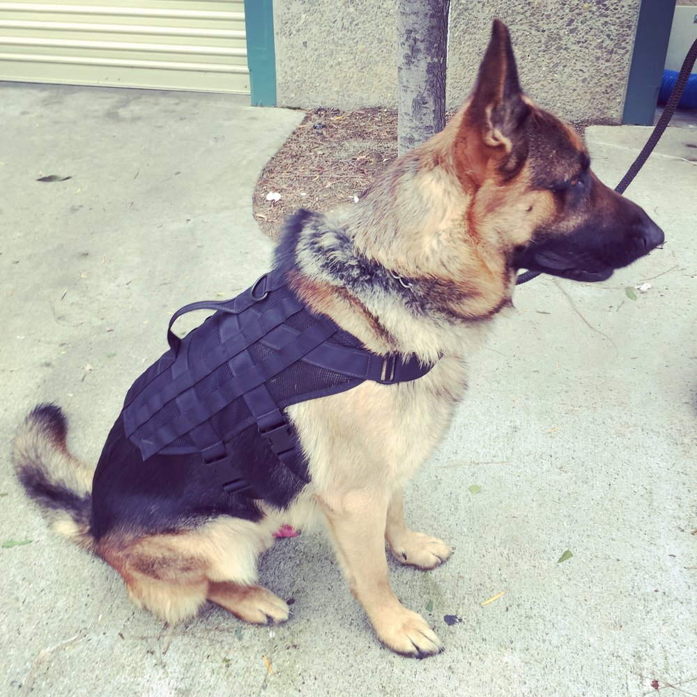 Canine Tactical Mesh Vest - Wilde Custom Gear