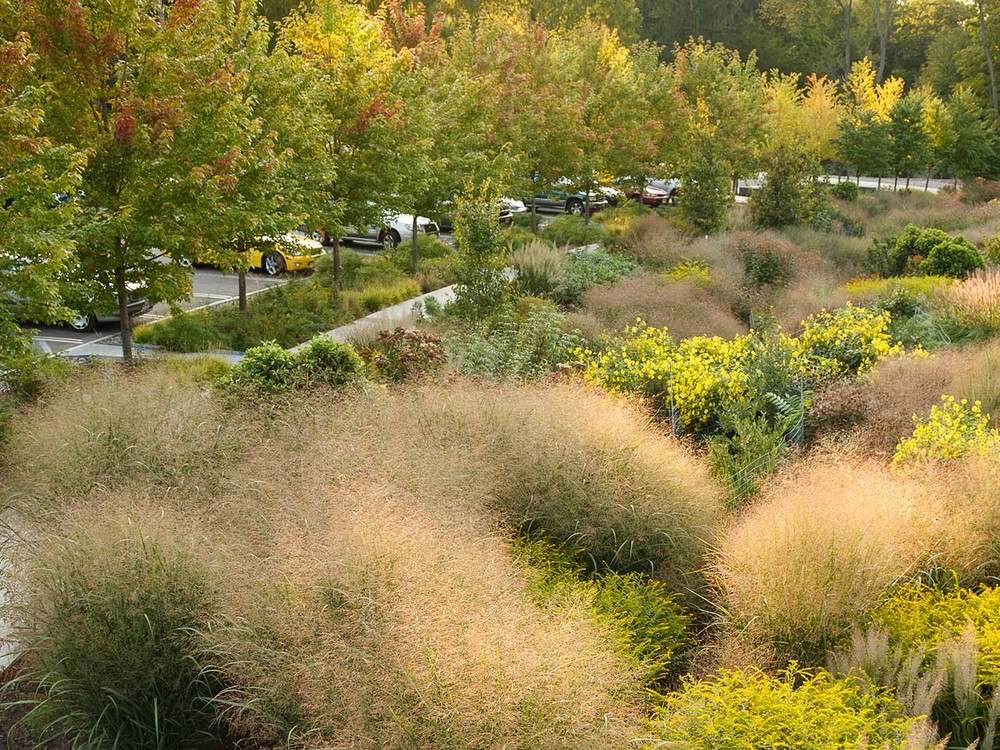 Bioswale at Cornell Plantations, Ithaca NY