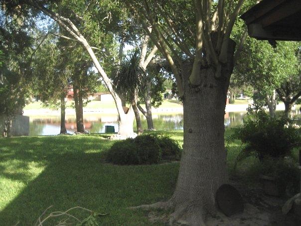 Grandma's backyard.