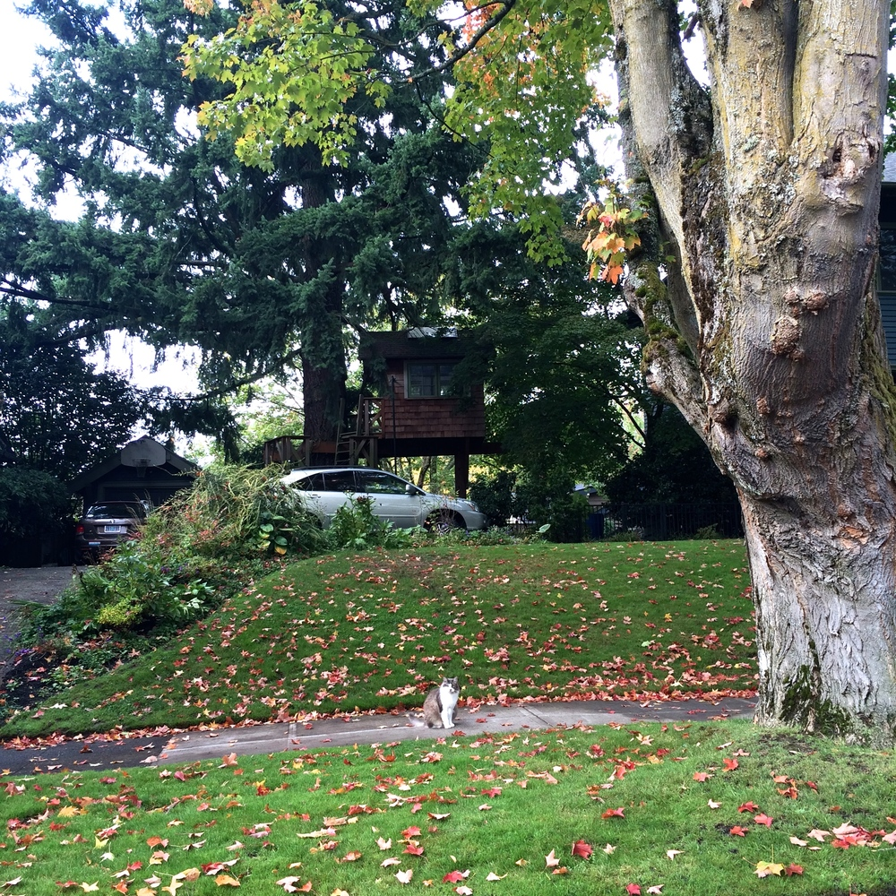 The sweet neighborhoods in Portland, full of charm, changing leaves, and sweet kitties.