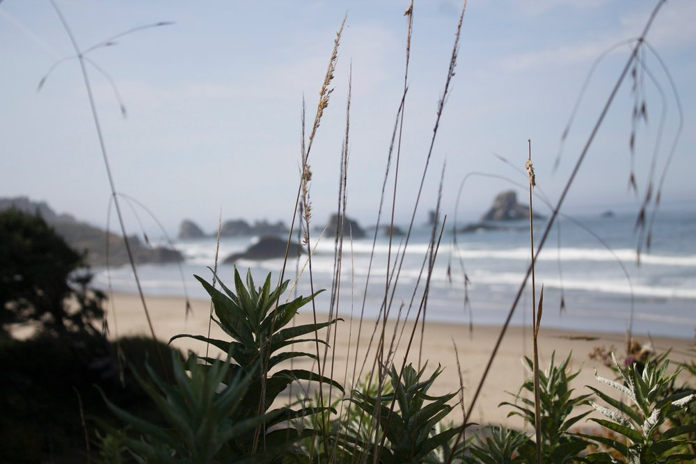 Oregon coast -  August, 2015