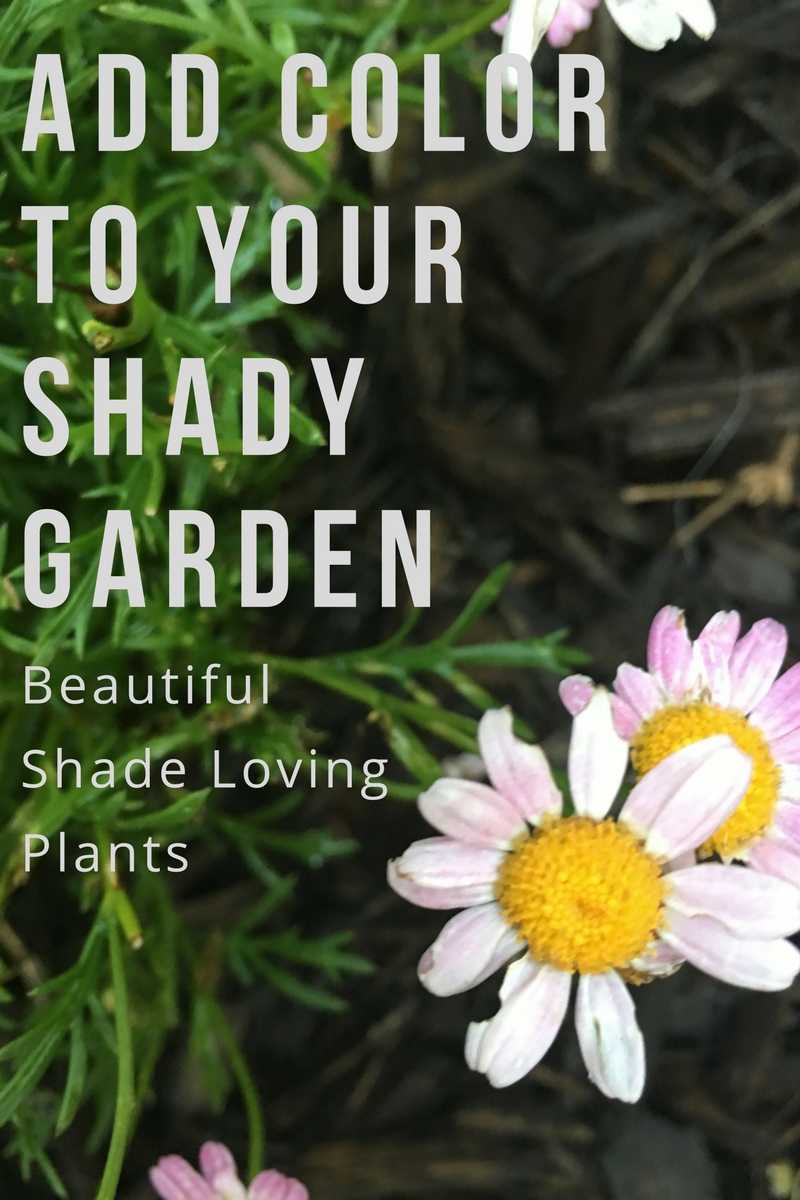 Add Color To Your Shady Garden Hurd Honey