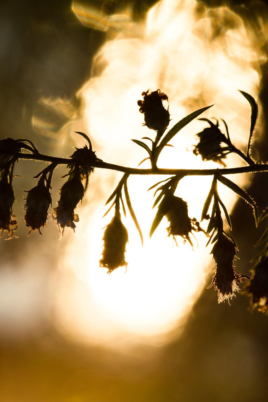 Вода позаду цієї квітки відбиває світло сідаючого сонця.