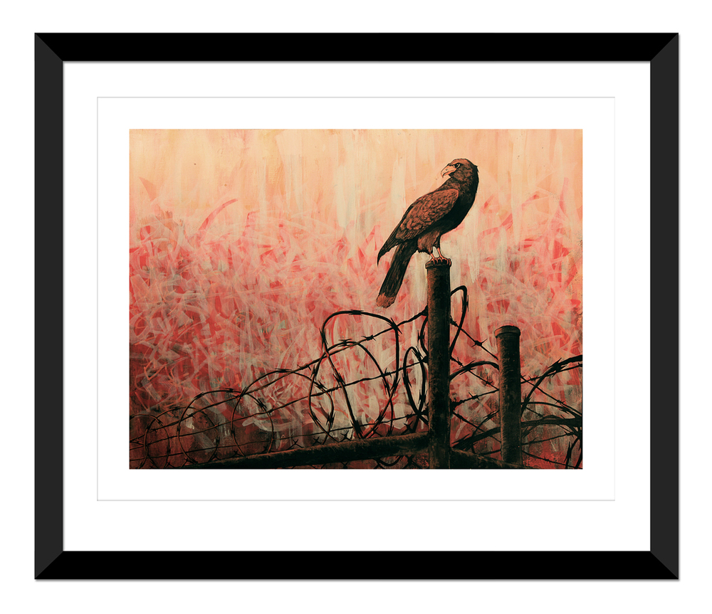 Falcon On The Fence (PRINT) Framed