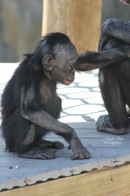 monkey3WM.jpg