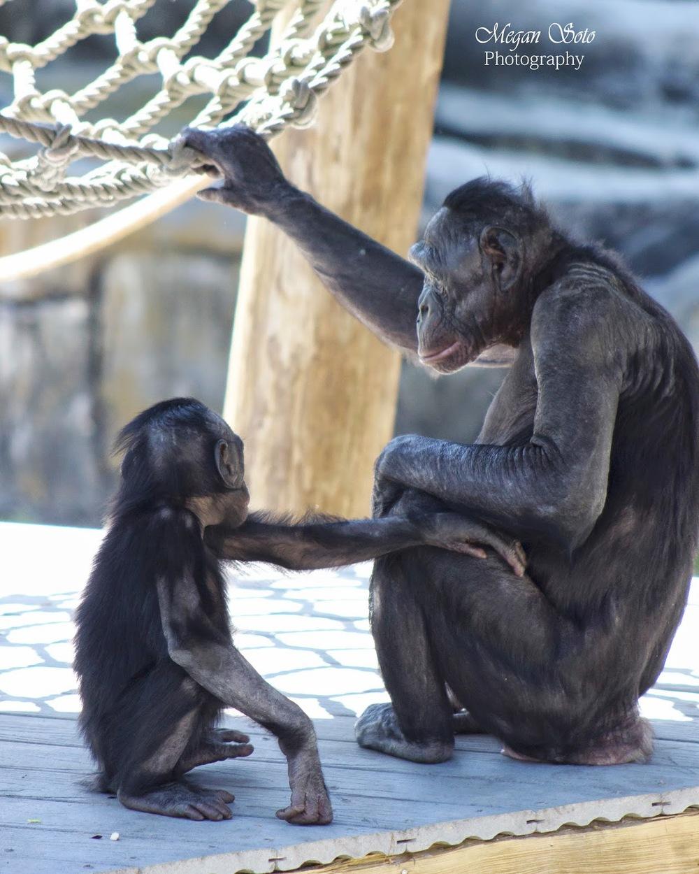 monkeyWM.jpg