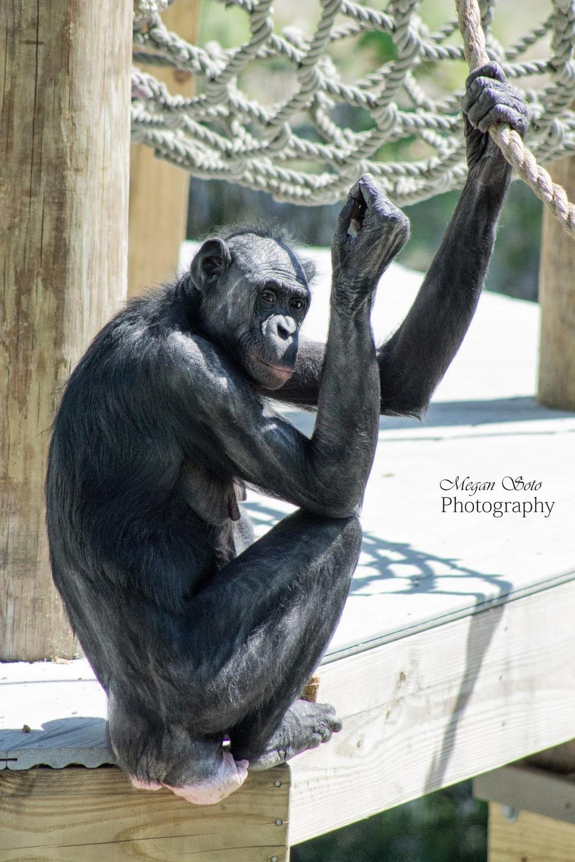 monkey4WM.jpg