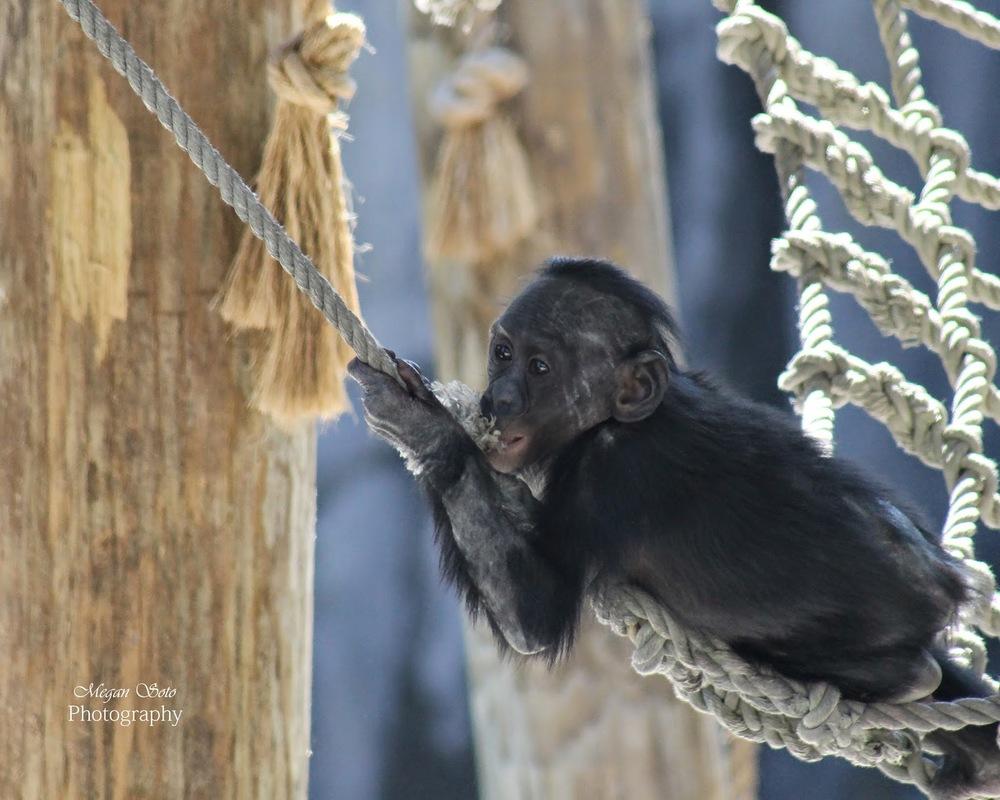 monkey2WM.jpg