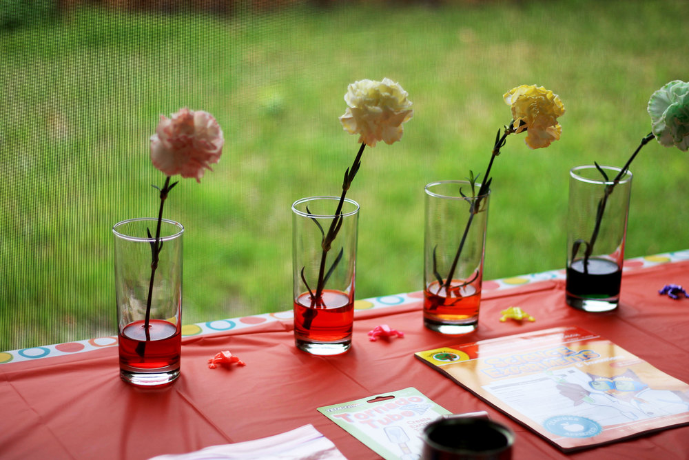 Flower Science project for toddlers