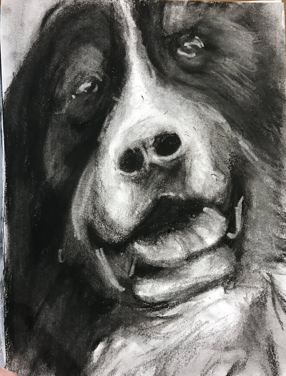 If you run into a Burnese Mountain Dog... you might as well snap a picture and do a sketch, right?