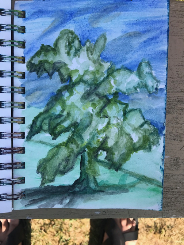 My favourite tree to find shade