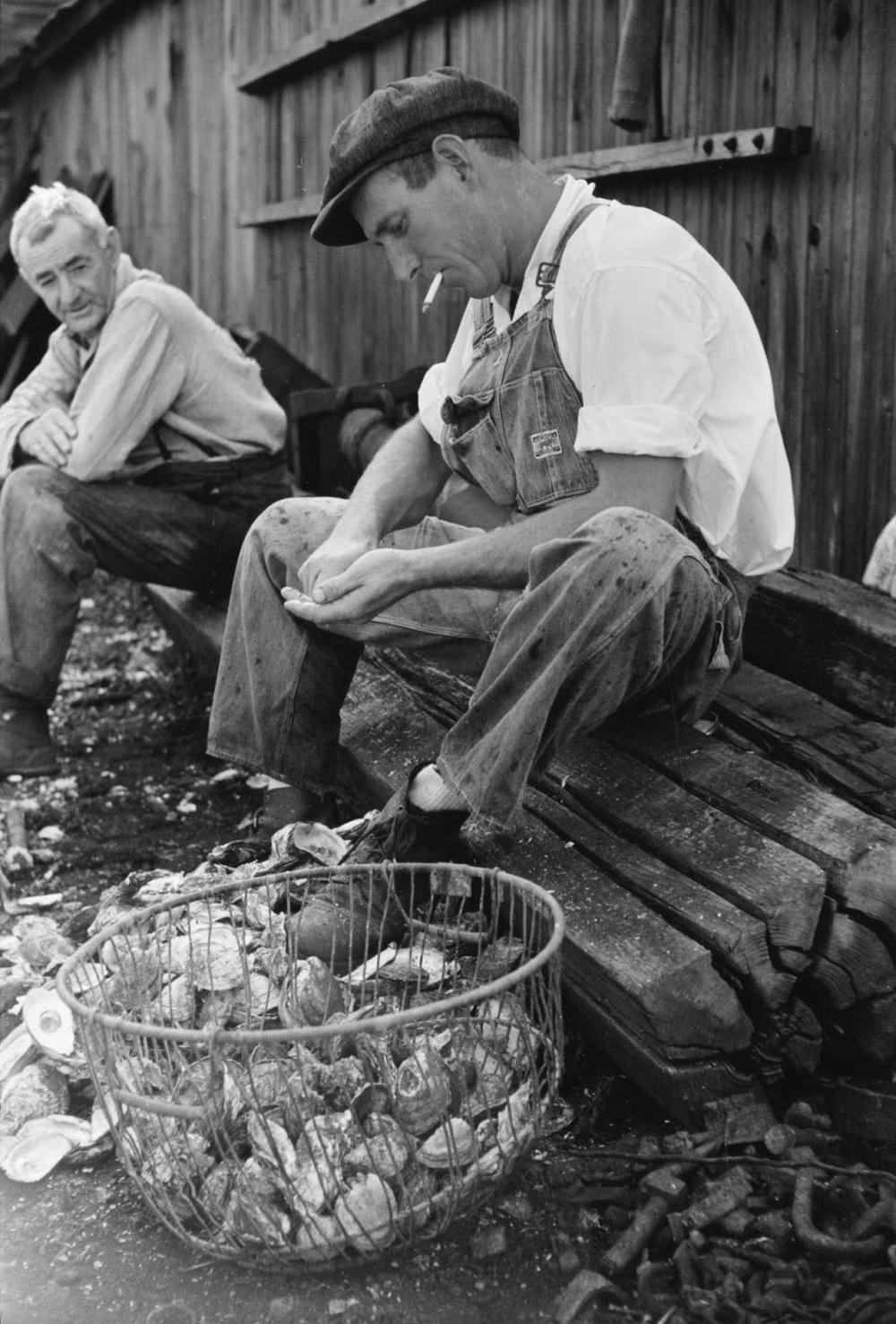 Arthur Rothstein - Shucking oysters, Bivalve, New Jersey, 1938.jpg