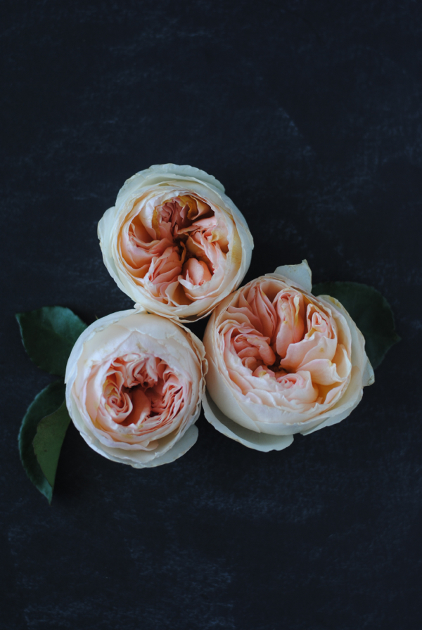 Everything You Need to Know About Garden Roses for Your Wedding