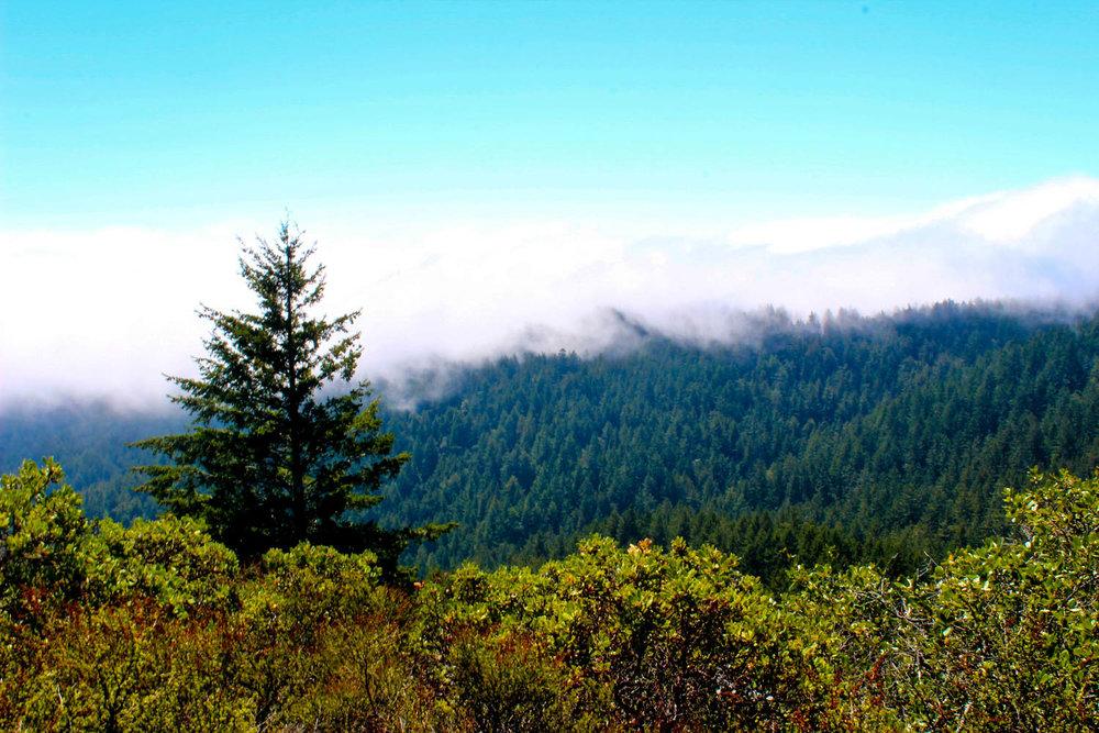 Twin Peaks, California