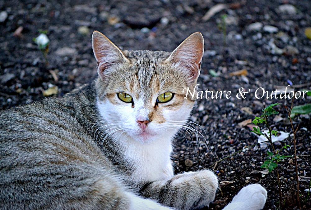 Nature&Outdoor.jpg