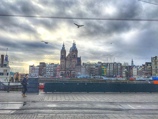 #Amsterdam #LocalPigeon #iPhone6s