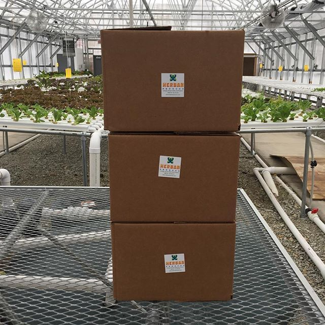 Orders ready to go with @forgeandfoster_ #herbanproduce #produce #greenhouse #urbanfarm #hydroponics